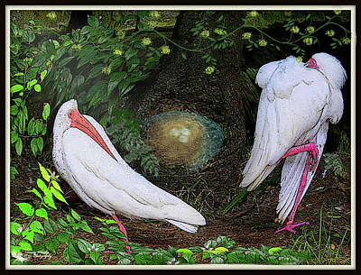 Ibis Mixed Media - Mr And Mrs Ibis by Denise Winship