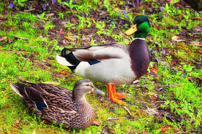 Photograph - Mr And Mrs Mallard by Dee Browning