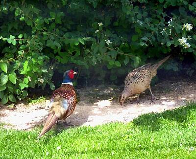 Digital Art - Mr And Mrs Pheasant by Will Borden