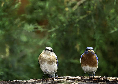 Mr And Mrs Art Print by Rob Travis