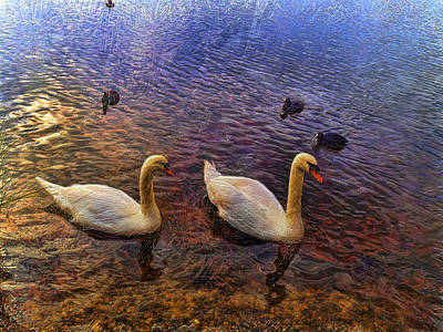 Mr And Mrs Swan Go Viisiting Art Print