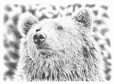 Animals Drawings - Mr. Bear by Casey