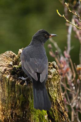 Photograph - Mr Birdy by Jean-Noel Nicolas