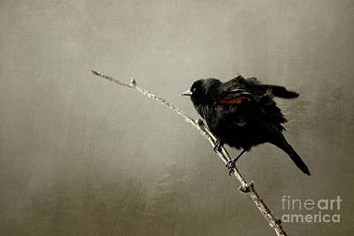 Photograph - Mr Blackbird by Beve Brown-Clark Photography