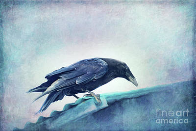 Crow Photograph - Mr. Bluebird by Priska Wettstein