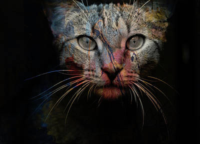 Fur Digital Art - Mr Bo by Paul Lovering