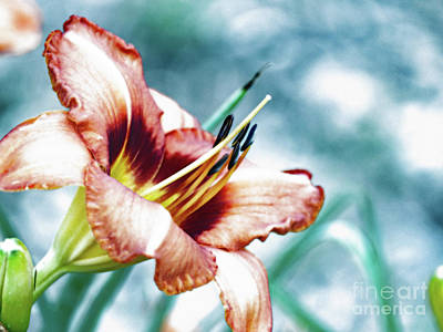 Photograph - Mr. Brown's Daylilly 001 A- Artistic by Ausra Huntington nee Paulauskaite