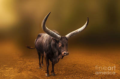 Photograph - Mr. Bull From Africa by Charuhas Images