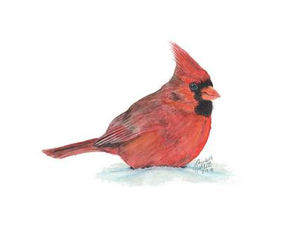Painting - Mr Cardinal by Betsy Hackett