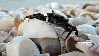 Photograph - Mr. Crab by Sean Allen