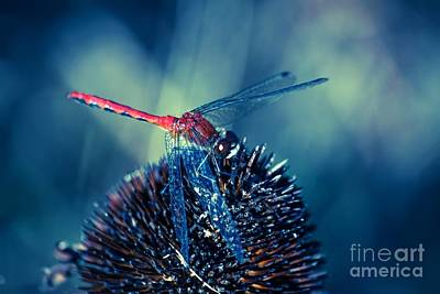 Libellule Photograph - Mr Dragonfly On Stage by Aimelle