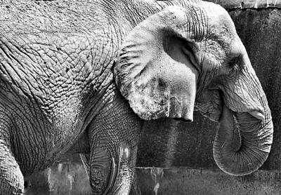 Omaha Nebraska Art Photograph - Mr. Elephant by Karen Scovill