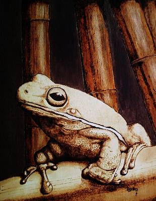 Mr. Frog Print by Freddy  Smith