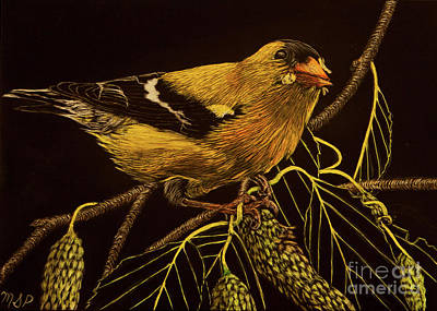 Painting - Mr Goldfinch by Margaret Sarah Pardy