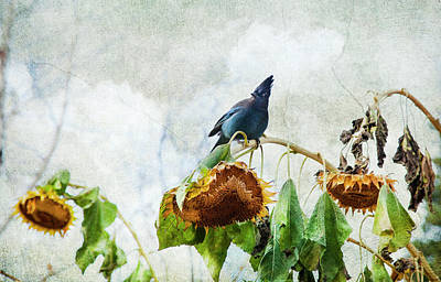 Photograph - Mr Jay And The Sunflowers by Theresa Tahara