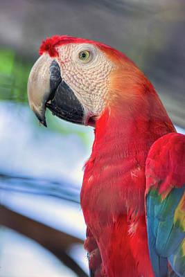 Painting - Mr Macaw by Nadia Sanowar