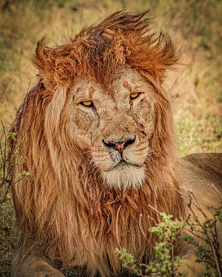 Photograph - Mr. Majestic  by Janis Knight