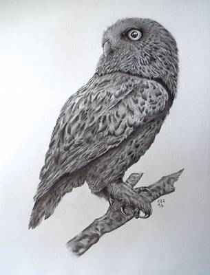 Drawing - Mr. Owl by Gilbert Photography And Art