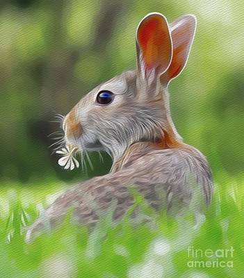 Mammals Royalty-Free and Rights-Managed Images - Mr Rabbit by Sarah Kirk