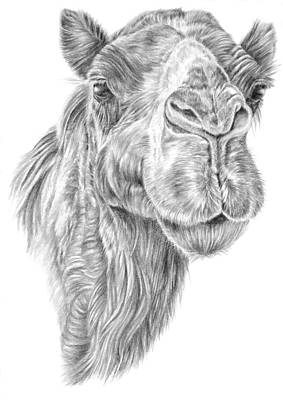 Drawing - Mr Rak Camel by Pencil Paws