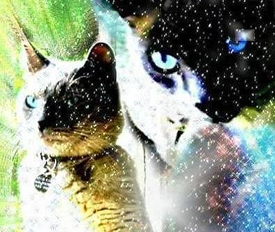 Kitty Photograph - Mr. Space Kitty by Dana Pedersen