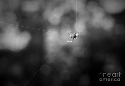 Photograph - Mr Spider Making His Web by Dan Friend