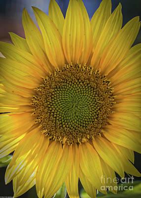 Photograph - Mr. Sunshine by Mitch Shindelbower
