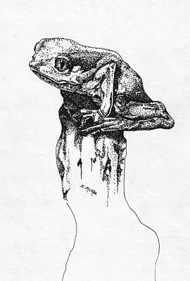 Drawing - Mr Tree Frog by Suzanne McKee