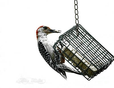 Photograph - Mr. Woodpecker by Melissa Messick