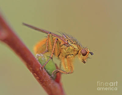 Bugs Photograph - Mr Yellow by Gary Wing