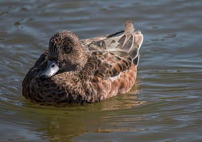 Photograph - Mrs. Grumpy Bird by Teresa Wilson