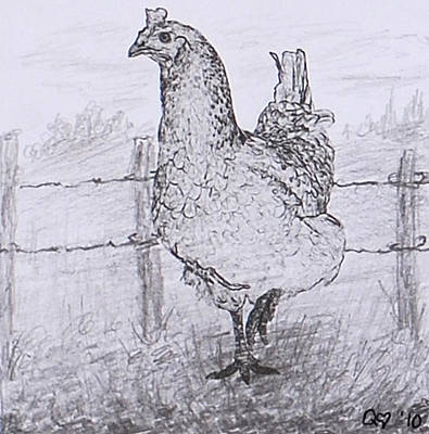 Drawing - Mrs. Hen by Quwatha Valentine