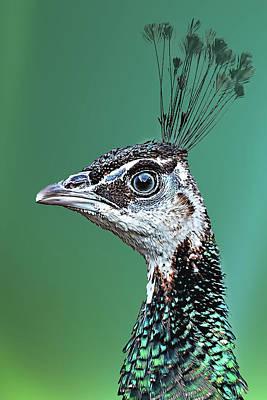 Mixed Media - Mrs. Peacock by Fotografie Jeronimo
