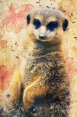 Animals Photograph - Mrs Suricate by Angela Doelling AD DESIGN Photo and PhotoArt
