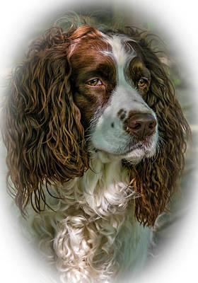 Animal Photograph - Ms Kaya 2 - Vignette by Steve Harrington