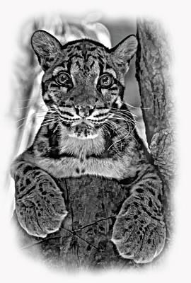 Cat Photograph - Ms Paws - Vignette by Steve Harrington