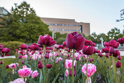 Photograph - Msu Spring 21 by John McGraw