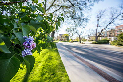 Photograph - Msu Spring 42 by John McGraw