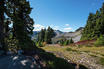 Photograph - Mt Baker Meadow by Tom Cochran