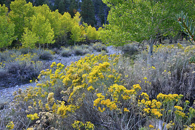 Photograph - Mt. Charleston Area Fall Colors by Ray Mathis