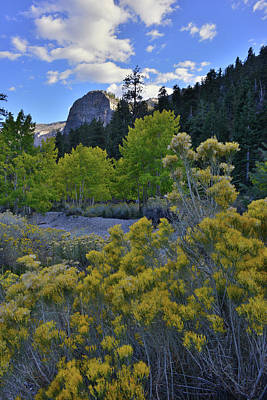 Photograph - Mt. Charleston Basin Near Las Vegas by Ray Mathis