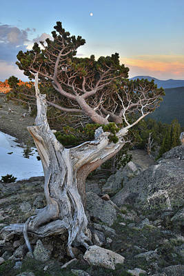Photograph - Mt. Evans Bristlecone Sunset And Moonrise by Ray Mathis