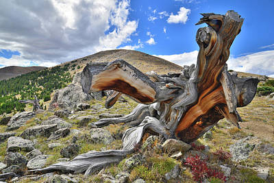 Photograph - Mt. Evans Dinosaur by Ray Mathis
