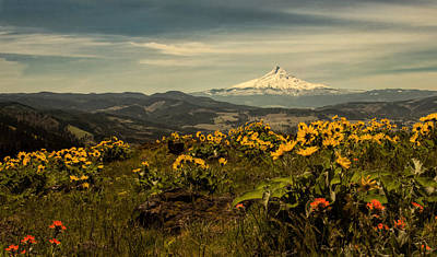 Photograph - Mt. Hood And Wildflowers by Don Schwartz