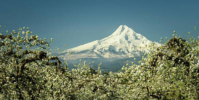 Photograph - Mt. Hood In Blossoms by Don Schwartz