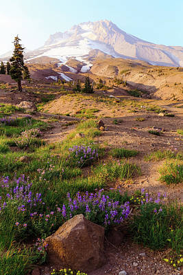 Photograph - Mt. Hood In Springtime by Athena Mckinzie