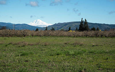 Photograph - Mt Hood Looming by Tom Cochran