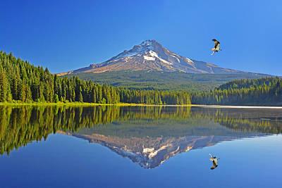 Photograph - Mt Hood Osprey by Jack Moskovita