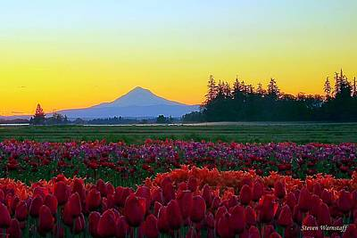 Photograph - Mt. Hood Sunrise And Tulip Field by Steve Warnstaff