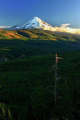 Photograph - Mt Hood With Snag by Albert Seger